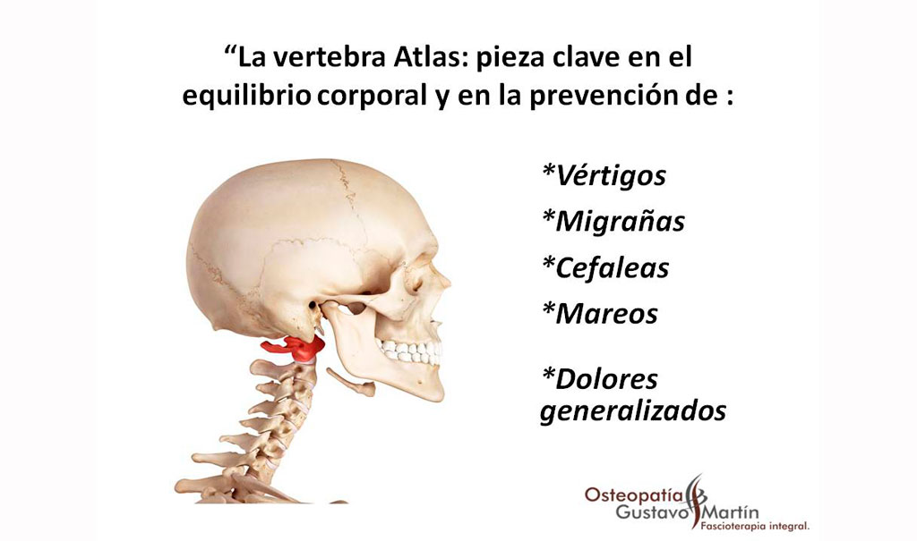 La vértebra atlas: pieza clave en el equilibrio corporal y en la prevención de vértigos y migrañas